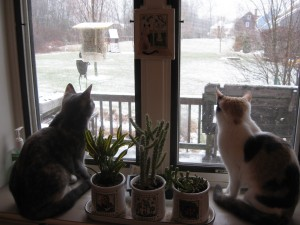 Puck and Phoebe watch the world...