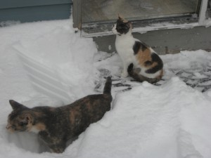 Kitties' first snow day