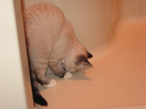 Sophie chasing a lady bug in the shower