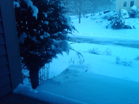 Blue, early morning snow!