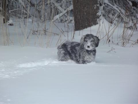 Bouncing boo snow (2)