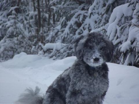 Bouncing Boo snow (21)