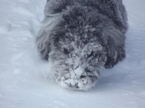 Bouncing boo snow (5)
