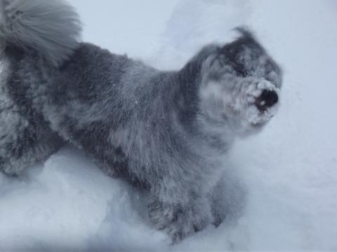 Bouncing boo snow (6)